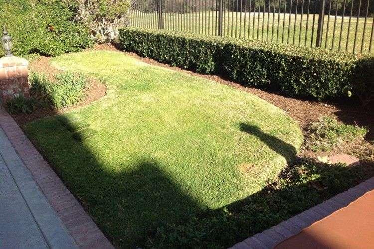 Coto de Caza Artificial Grass backyard extreme makeover